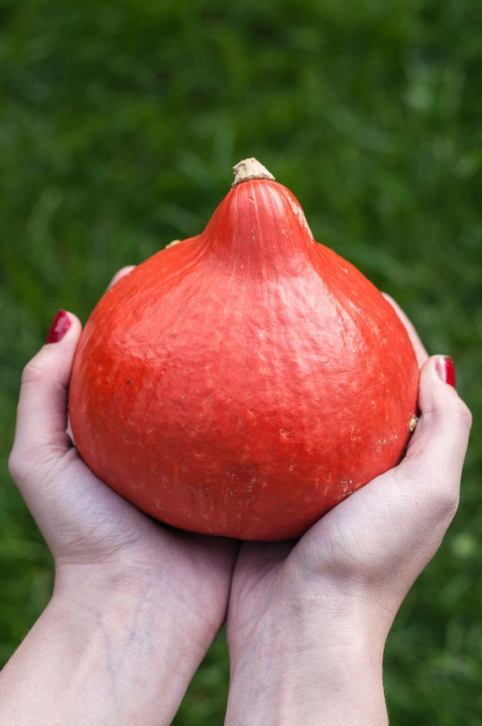 Hokkaido potimarron kuri squash Pumpkin recipe - Vegan Family Recipes