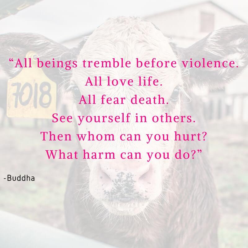 Vegan Quote Buddha Instagram Social Media - VeganFamilyRecipes.com
